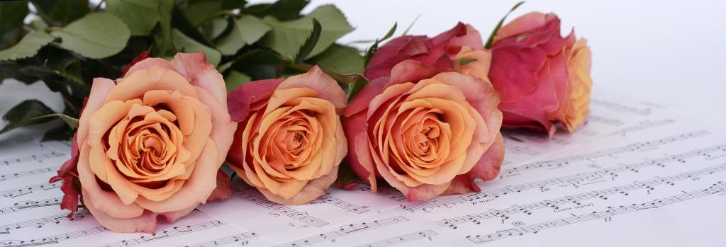 roses-2366341_1920